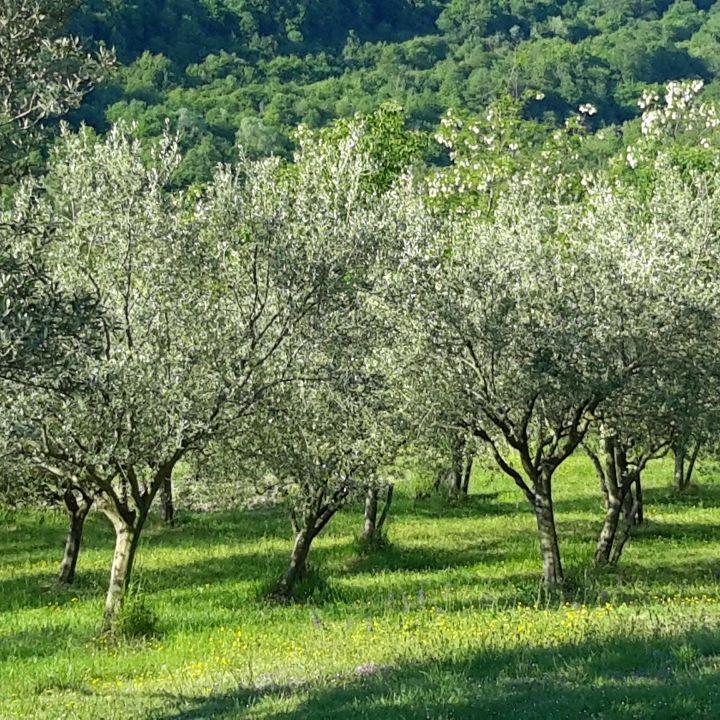 Eko kmetija Oljčni gaj