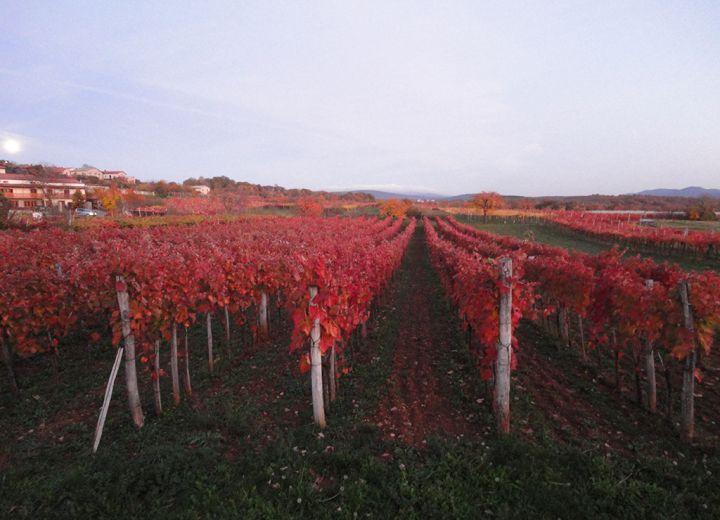 Vinska klet Tavčar- Pri Starčih